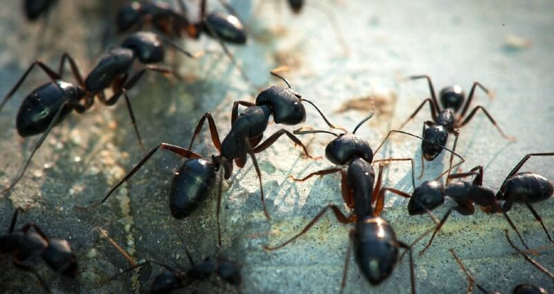 ant control services in Lubbock TX